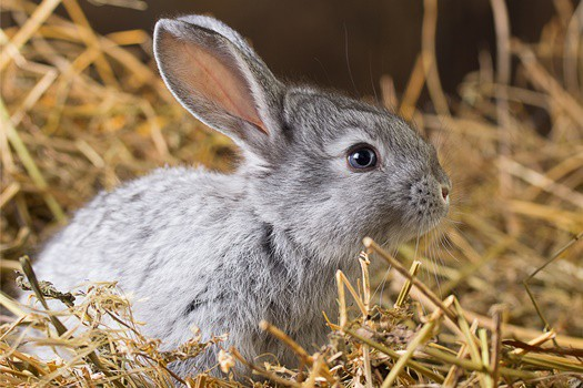 why do rabbits have whiskers?