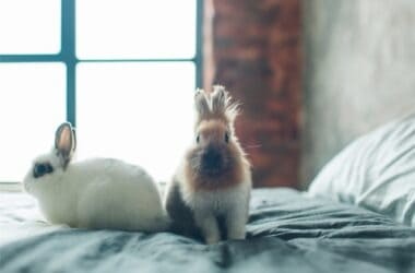 Should My Pet Rabbit Sleep in Bed with Me?