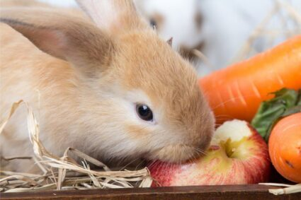 can rabbits eat apple pips?