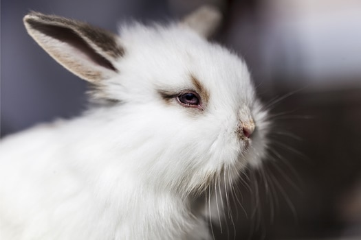 do rabbits close their eyes?