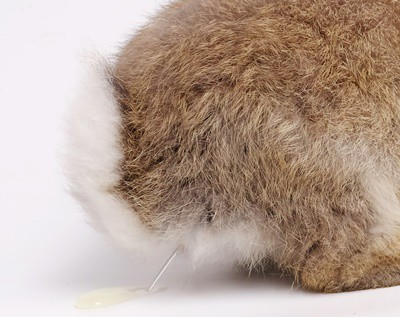 What Does Normal Rabbit Pee Look Like? — Rabbit Care Tips