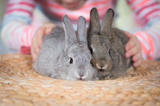 how do rabbits forgive each other?