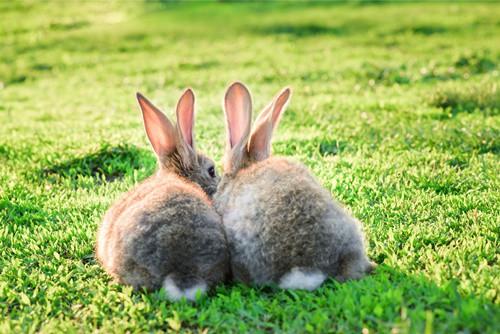 how do rabbits say sorry?