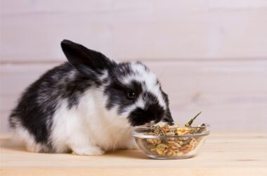 human foods that are safe for rabbits