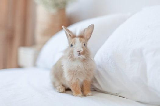 rabbit sleeping in bed
