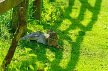 signs of heat stroke in rabbits