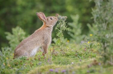 How do rabbits benefit humans?