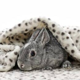 can I give my rabbit a blanket?