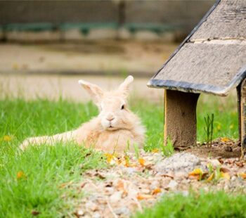 can rabbits live outside all year round?