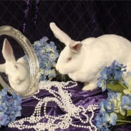 can rabbits recognize themselves in mirrors?