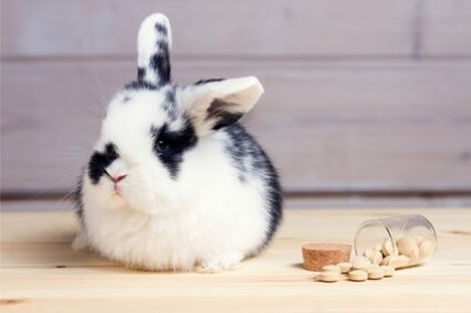 do rabbits cry when in pain?