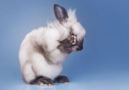 do rabbits make crying noises?