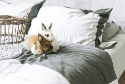 do rabbits need blankets?