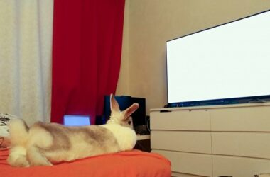 do rabbits watch television?
