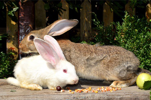 foods that cause gas in rabbits