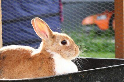 girl bunny names