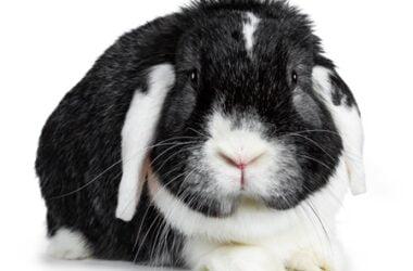 male pet rabbit names