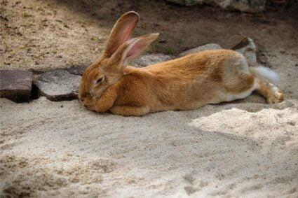 male rabbit name ideas