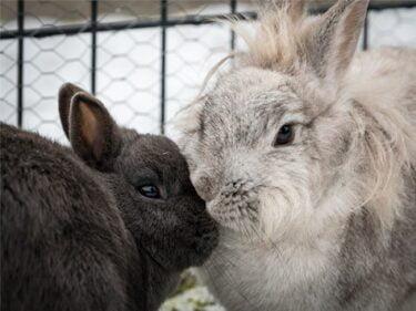 male rabbit pair names