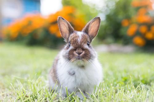 rabbit honking and circling