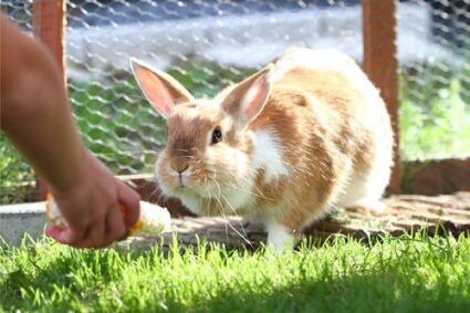 rabbit names for females