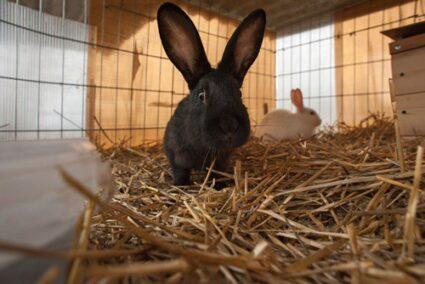 should a rabbit live inside or outside?