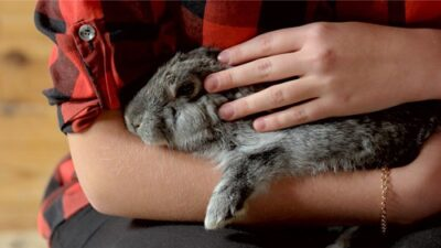 unusual female rabbit names