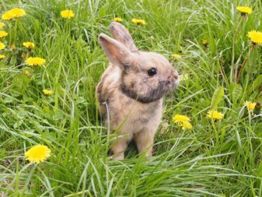 weeds rabbits like