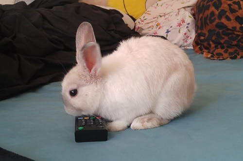 what do rabbits like to watch on TV?