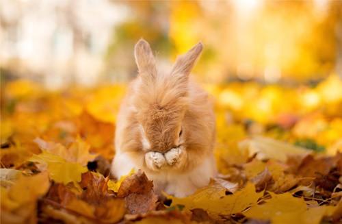 rabbit slobbering