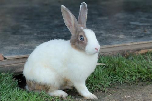 rabbit wet around mouth
