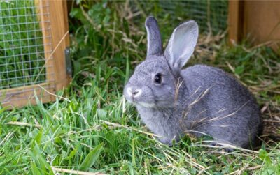 why is my rabbit drooling?