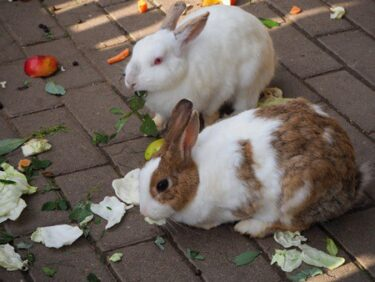 Can rabbits eat vegetable leaves?