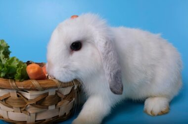 Can rabbits eat vegetable tops?