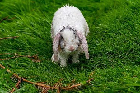 are rabbits scared of rain?
