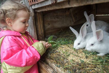 can rabbits eat mint leaves?