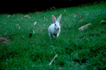 can rabbits play in the rain?
