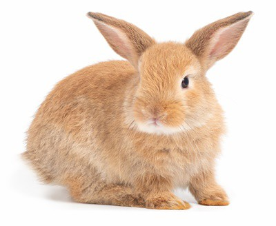 do rabbits have paw pads?