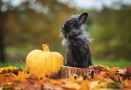 do rabbits like to eat pumpkin?