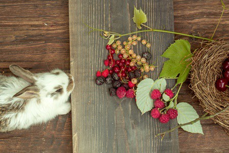feed blueberries to rabbits