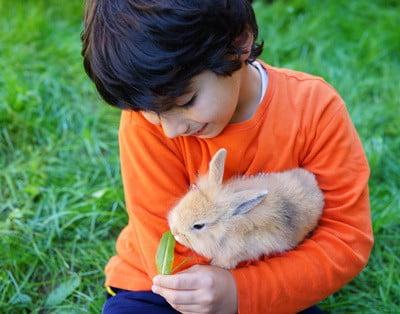 feeding rabbit mint leaves