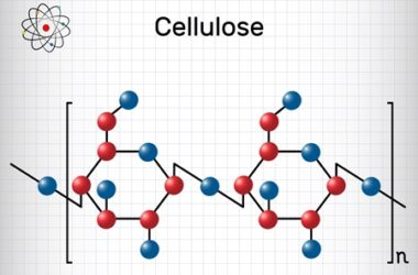 how do rabbits break down cellulose?