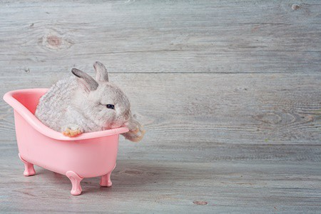 how do you wash a rabbit?