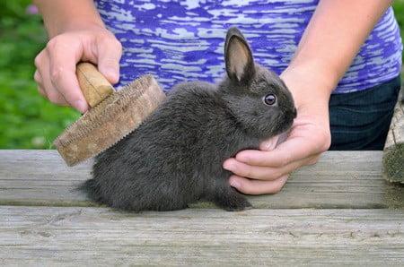 how to unmat rabbit fur