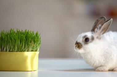 low calcium rabbit diet