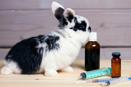 natural pain relief for rabbits