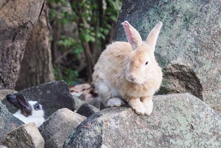 rabbit bald patch around eye