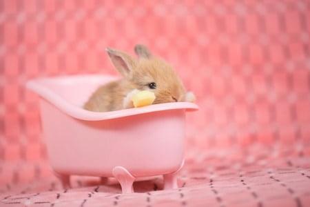 should you bathe a rabbit?