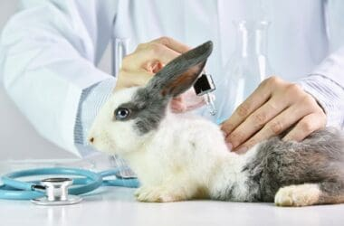 what causes allergies in rabbits?