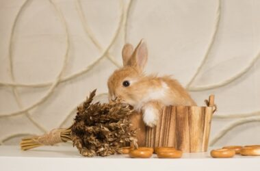 what kind of cereal can rabbits eat?